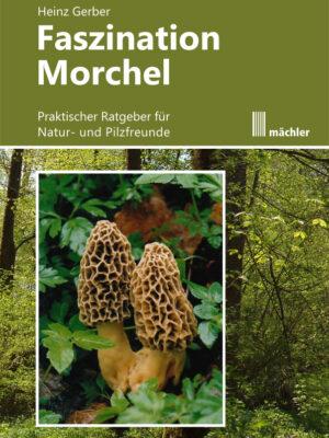 Morchel